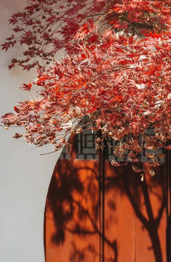 秋天中国绝美的10个旅行地 看到第一个就忍不住想去