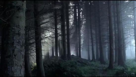 临冬城的森林