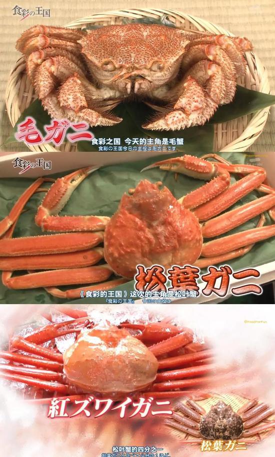 从上至下分别是毛蟹、松叶蟹、红雪蟹