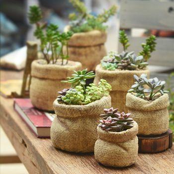 多肉植物 图片来源自Pinterest@Jeany Big