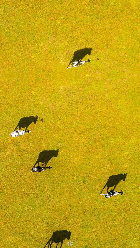 新疆南山草原