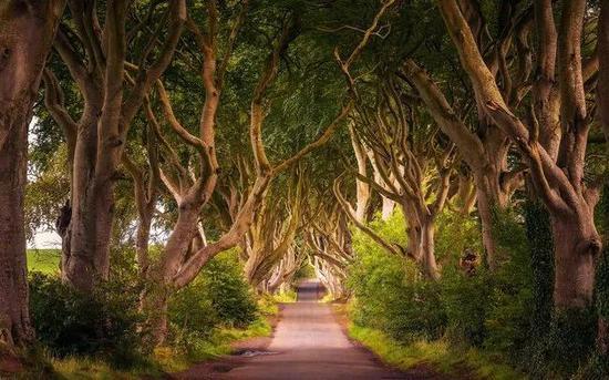 黑暗树篱(Dark Hedges),北爱尔兰