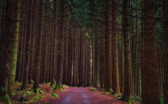 托里摩尔森林公园(Tollymore Forest Park),北爱尔兰