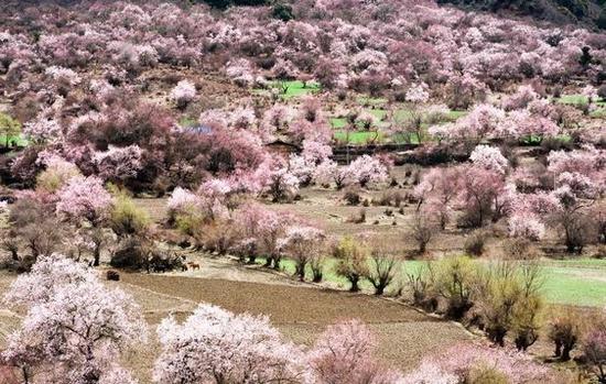 桃花林 图片来源自PinterestKoto Buki