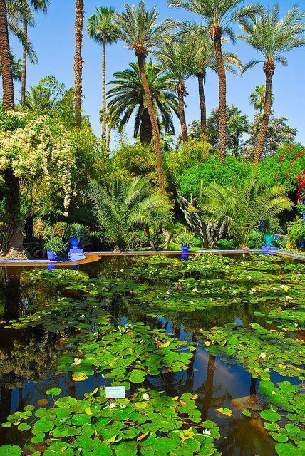 马约尔花园 图片来源自flickr.com
