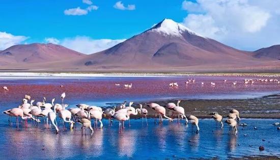 玻利维亚传奇: