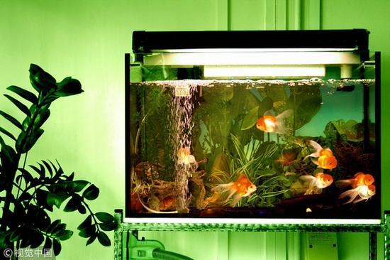 鱼缸设计 图片来源自视觉中国