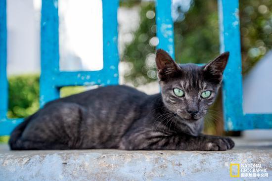 这个眼睛犹如翡翠的猫咪,仿佛只属于这个蓝色的童话世界