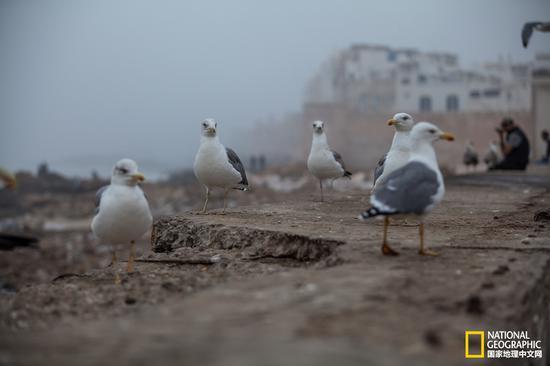 索维拉的海岸上,聚集着大量的海鸟,每当海风来临,便会迎风起舞