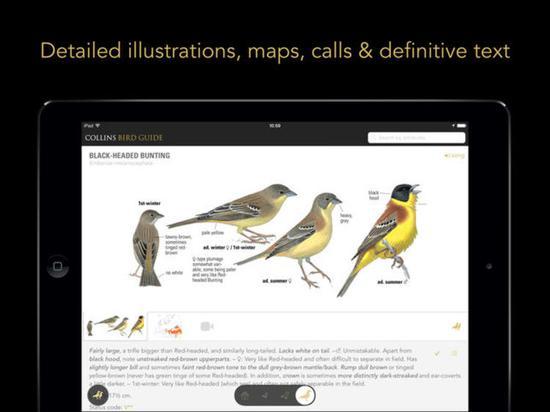 《柯林斯鸟类指南》是欧洲必备的观鸟手册。