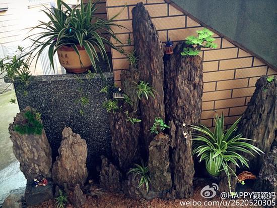 假山盆栽 图片来源自微博