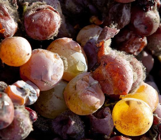 喝葡萄酒可以减肥?四个步骤告诉你怎么瘦