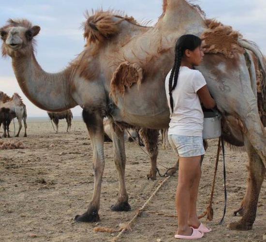 骆驼奶 图片来源自upflow.co