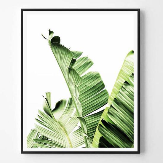 绿色植物墙面装饰 图片来源自pinterest