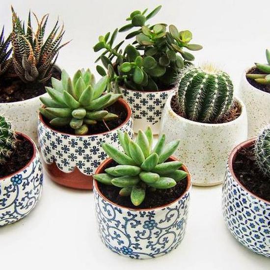 小型盆栽 图片来源自elspethjean.tumblr.com