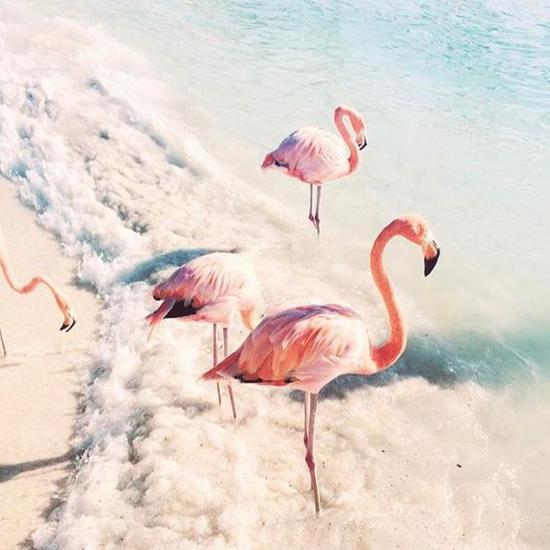 阿鲁巴岛火烈鸟 图片来源自instagram.com