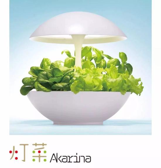 灯菜:是一款室内无土水培种植蔬菜、花卉和草药等的种植器。