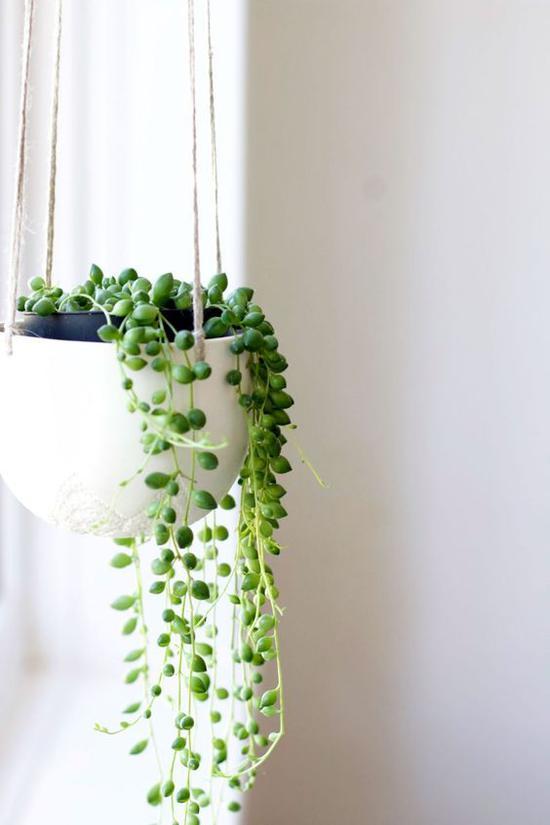 绿色植物 图片来源自wearefound.com