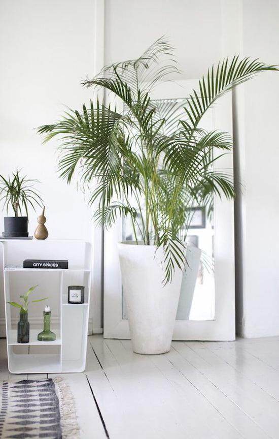 大叶型植物 图片来源自myscandinavianhome.blogspot.fr