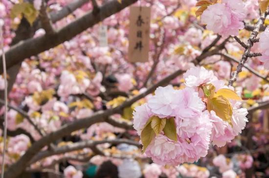?Tomoharu Mogami/Flickr