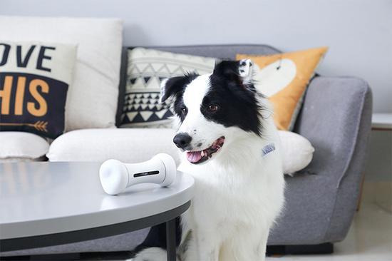Cheerble Technology推出的智能宠物狗玩具Wickedbone