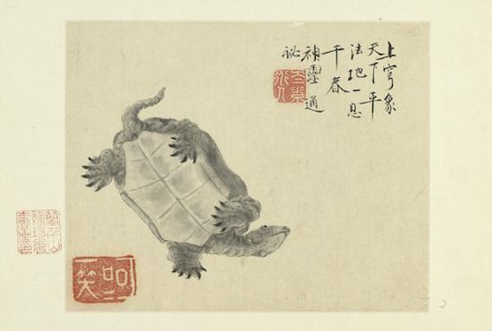 清 华喦 《写生册(龟)》