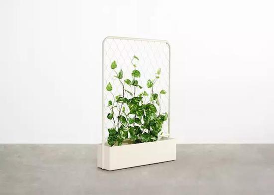 植物可以依附于网状结构不断攀爬