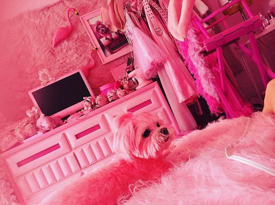 甚至Kitten最爱的狗狗都是粉红色