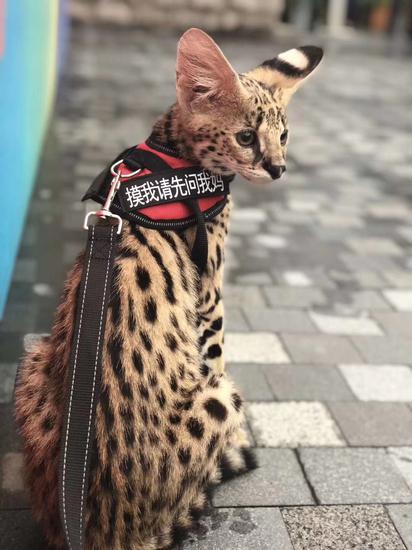 暖男海兰察亲自示范 进阶版猫奴养成指南efataleofmemories