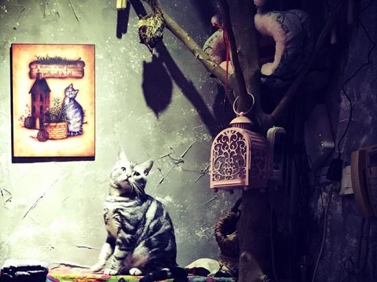 鼓捣猫呢咖啡店里的猫