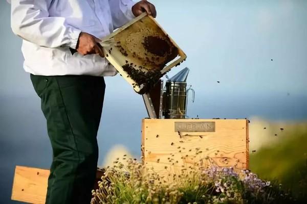 蜂蜜特别纯净