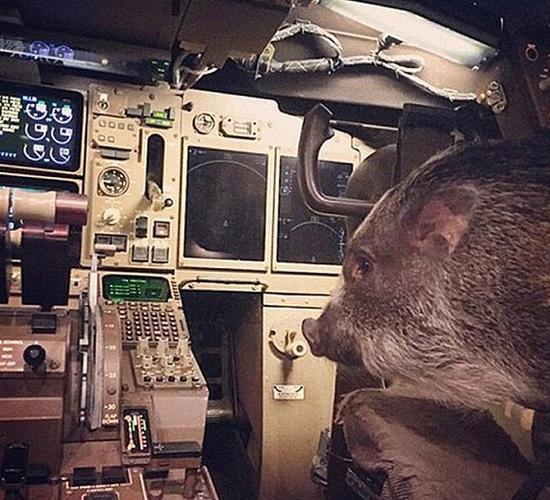 Hamlet来到过飞机的驾驶舱