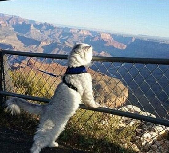 Gandalf在大峡谷