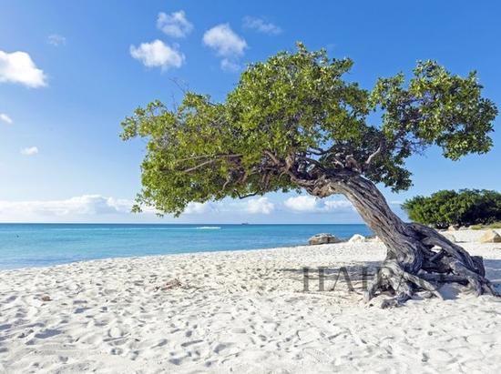 阿鲁巴 Aruba