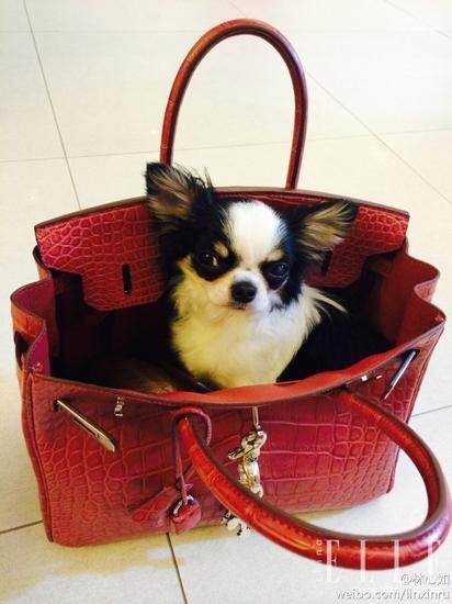 包包和小狗