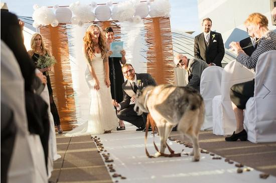谁说你的宠物不能出席你的大日子?毛茸茸的朋友会带来更多的欢笑和快乐