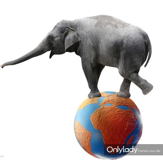一整头头发可以承受的住一两只大象的重量