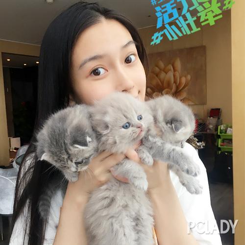 杨颖抱小动物图片