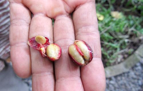 公豆(左)vs 母豆(右)