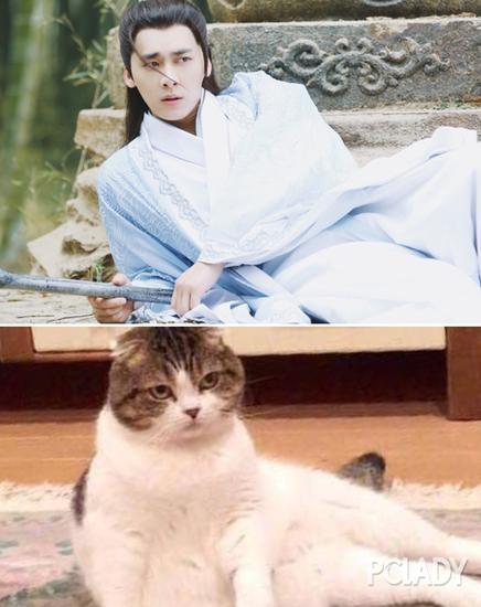 李易峰撞脸猫咪