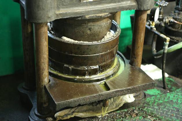 茶花果实放入压榨槽中