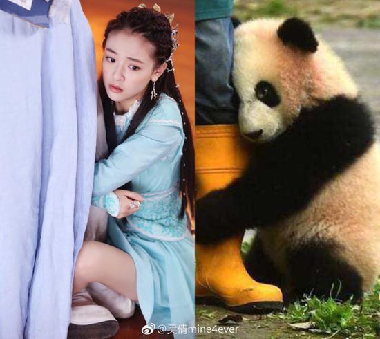 抱大腿隔空撞了国宝大熊猫