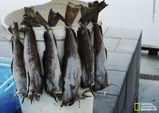 风干的鱼肉正待售卖