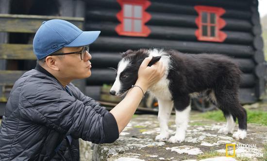 戈萨达鲁尔的牧羊犬