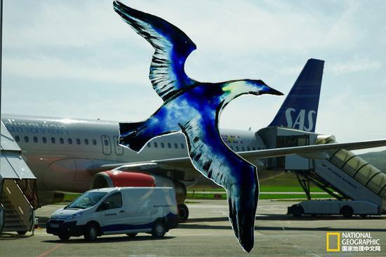 法罗群岛机场用玻璃鸟装饰机场,停机坪上停靠着北欧航空的飞机。
