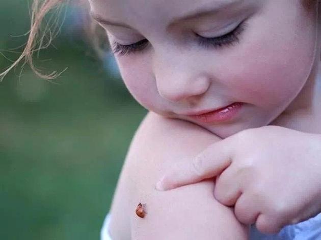 小瓢虫是幸运的象征