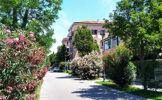 种满夹竹桃的街区