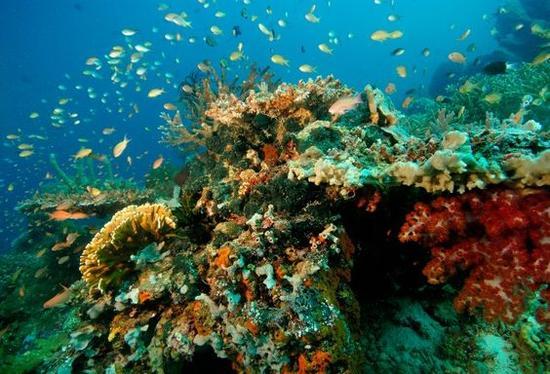 安曼瓦那潜水 图片来源自smithhotels.com