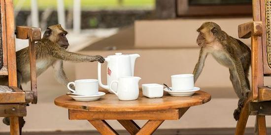 安曼瓦那动物 图片来源自lecoresorts.com