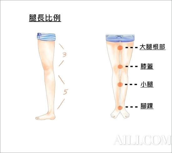 美腿结构图